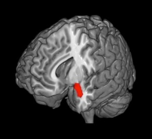 Amygdala -- less grey matter here means a person is less reactive